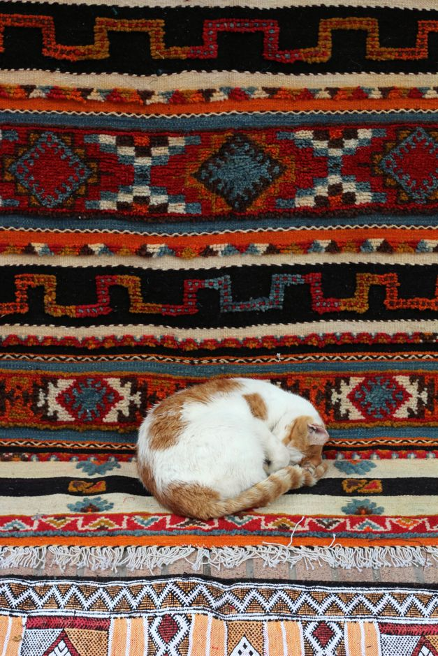 A very cute Moroccan cat