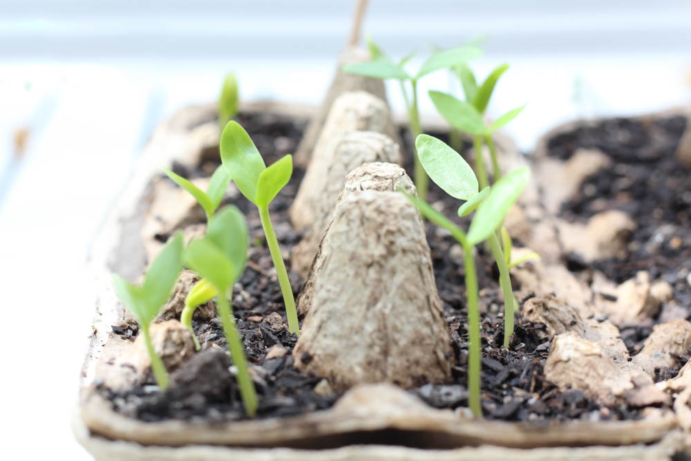 Instagram is full of so many inspiring photos - like this one, of seedlings growing.