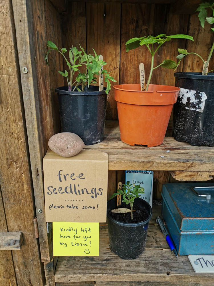 Free stuff - like these seedlings - are often left on our honesty stall.