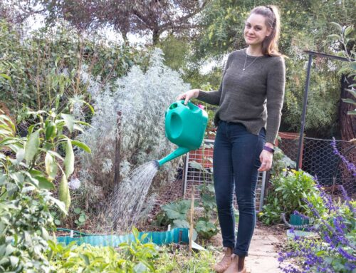 Monthly gardening column for ABC Everyday