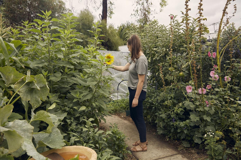 Koren in my backyard with edible plants - sunflowers, Jerusalem artichokes, an apple tree.